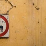 ...der Esel bracht in Fes einen Führerschein...