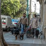 """...auch das gibt es in Buneos Aires - """"Hundeausführer""""..."""