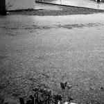 Und während der Nacht und am näschten Tag hat es sintflutartig geregnet.....