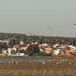 ...die vielen Wasservögel die hier überwintern ziehen Touristen an....