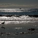 Der Pazifik bei Carpinteria