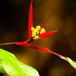 ....tropische Urwaldblumen.....