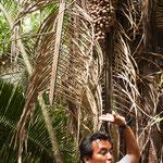 """Unser toller """"guide"""" hat auch die Pflanzenwelt erklärt - und ihre Verwendung"""