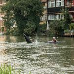 ...Wassersport ist mitten in Bamberg möglich...