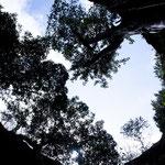 ....hier ein Blick durch die Öffnung einer anderen Cenote