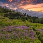 ...und wunderbare Blumenwiesen im Sommer...