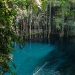 tolles blaues Wasser und unzählige Luftwurzeln von oben.....