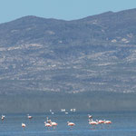 ...in weiter Ferne sahen wir Flamingos...