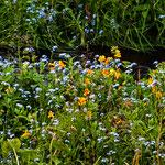 ...entlang des Baches fanden wir tolle Wildblumen...