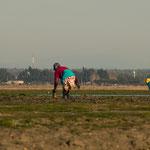 ...Frauen sammeln im Wattmeer Muscheln...