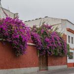 ...typisch andalusisch: weisse Häuser und viele Blumen an den Aussenwänden...