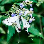 ....tolle Blumen und Schmetterlinge.....