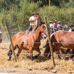 ...bewertet werden Geschwindigkeit und die Herde zusammen bleibt...