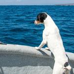 ...sogar der Wachhund war begeistert und absolut still...