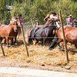 ...in diesem Rondell werden die Pferde nach gewissen Regeln getrieben...