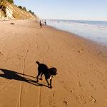 Santa Barbara Beach mit Oskar