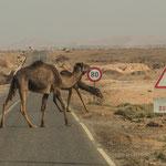 ...aufpassen auf die Geschwindigkeit, Sand und Kamele