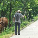 .....Kühe werden noch gehütet.....