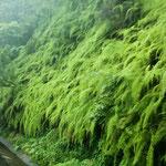 .....durch den vielen Regen eine unglaublich üppige Vegetation.....