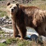 ein Grizzly - Mann....