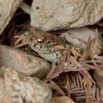 ein kleiner Frosch wollte sich verstecken