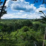 ....ein Blick von Eladios Farm auf den umgebenen Urwald....
