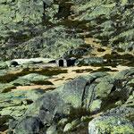 ...auf dem Gestein ist grünes Moos...