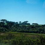 ...wir waren beeindruckt vom satten grün der Wiesen und Wälder...