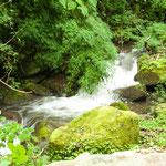 """....und erste Begegnung mit dem """"Los Quetzales Nationalpark""""...."""