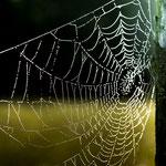 .....Spinnweben noch voller Tau......