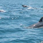 ...hier begleiteten wir junge Forscherinnen zu einer Walbeobachtungsinsel...