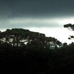 ...mit tollem Regenwald...