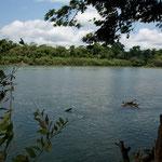 """der mächtige """"Rio Lacanja"""" als Grenzfluss zum Nationalpark"""