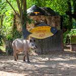 ...das hauseigene Tapir kommt vom Ausflug zurück...
