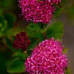 .....auch hier wunderschöne seltene Blumen.....