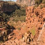 Hier in der Gegend gibt es noch viele wilder Berberaffen - dieser hier war zahm...