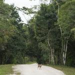 Da sehr wenig Verkehr gibt es ganz viel Wild