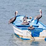 ..... die sogar die Pelikane annehmen.