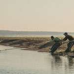 ...ausgelegte Netze werden manuell an Land gezogen...
