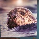 Eindrücke vom interessanten Seehund Museum...