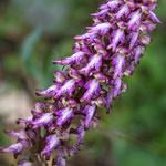 ...und eine tolle Flora...