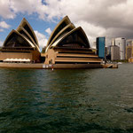 "Die weltberühmte ""Sydney Oyster"""