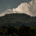 Die Berghänge sind überall geometrisch parzelliert (wertvolle Kaffeepflanzen)