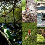 ...all diese Vögel sahen wir im Park...