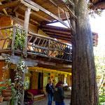 Der Baum ist >400 Jahre und proper - das Hotel vielleicht 50 und baufällig