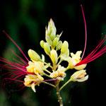 ...an seinen Hängen gibt es solch wunderbare Blumen...
