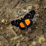 ....Schmetterlinge gibt es überall....
