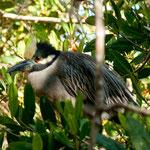 Wasservögel in unserer Lagune am Übernachtungsplatz.....