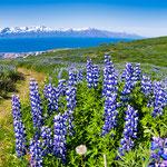 ...Herz was willst du mehr - Island ist einfach wunderschön...