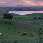 Blick vom unserem Stellplatz - auf Kühe mit Glocken - wie im Allgäu